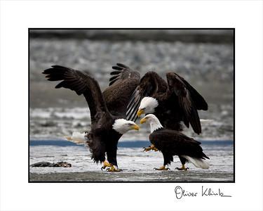 """""""Eagle Caucus"""""""
