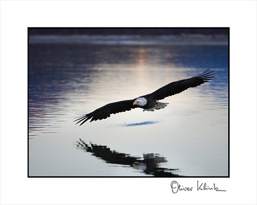 """Eagle at Sunset 1"""