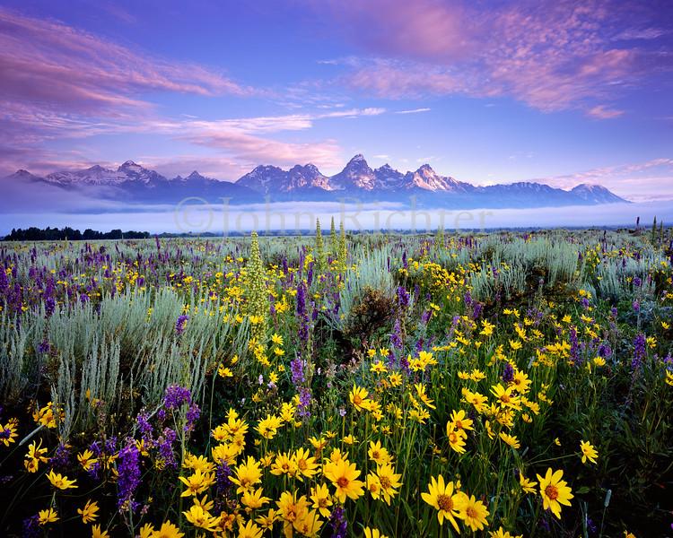 Glory of Morning