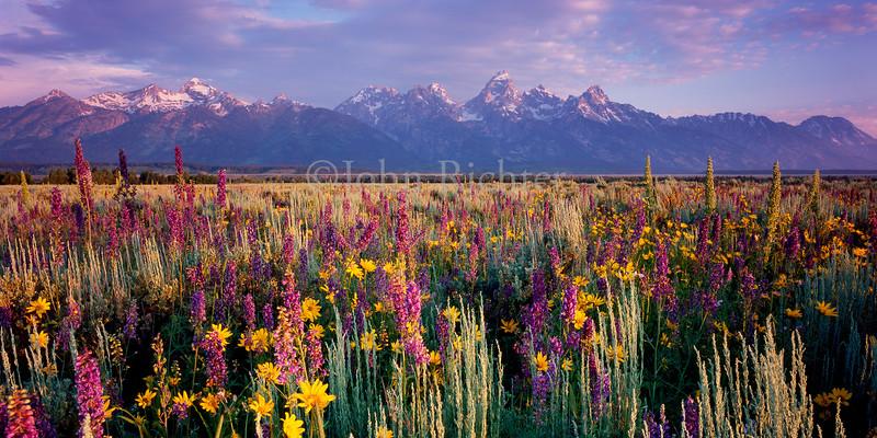 Teton Flowers