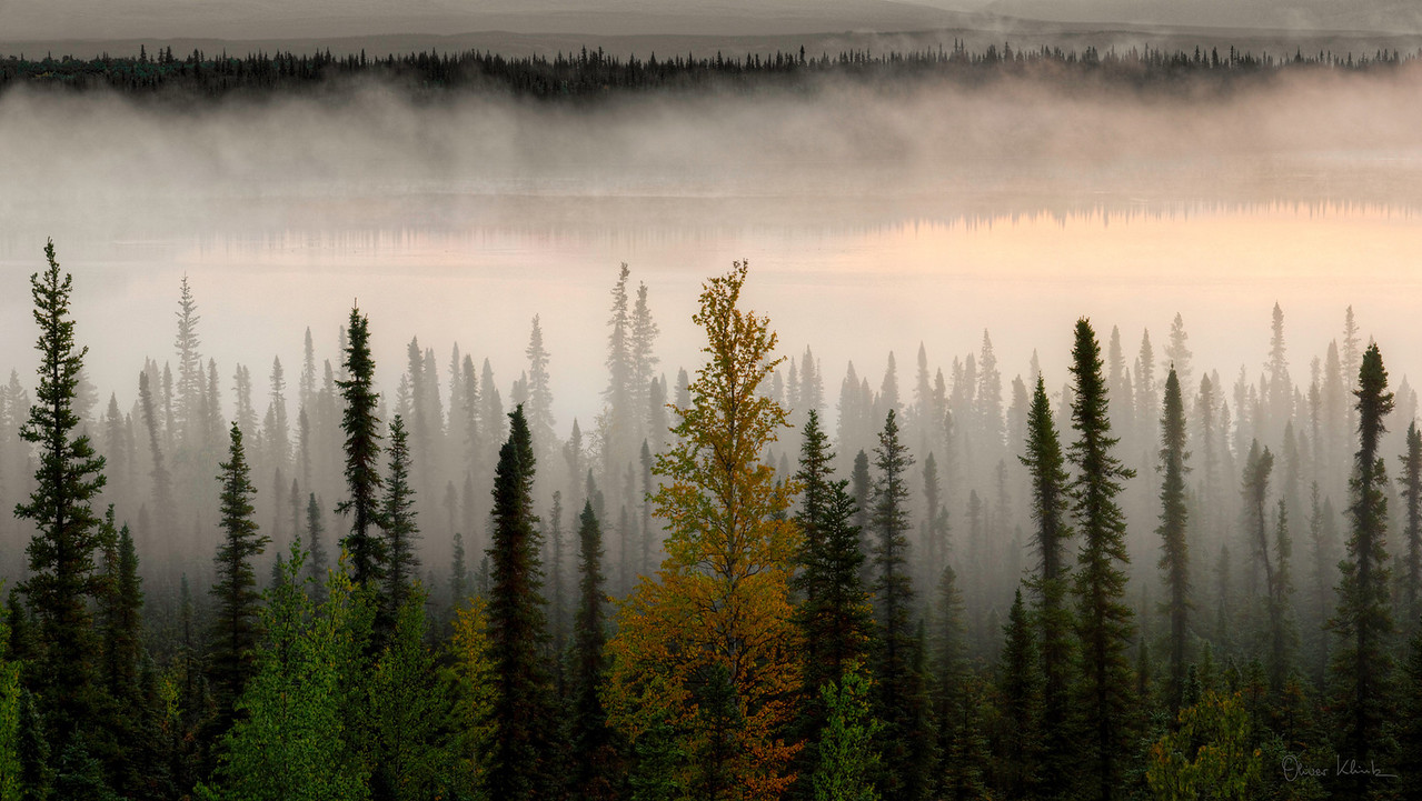 "Fog in the Trees (32x40"" Print) - Copyright 2009 Oliver Klink"