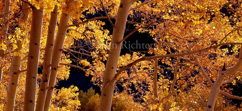 Autumns Amber Glow