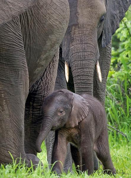 7. Baby Elephant