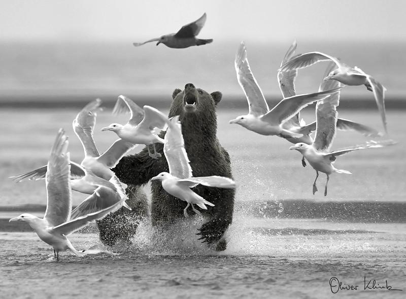 12. Pesky Gulls