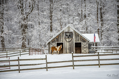 Cozy barn & patient horse