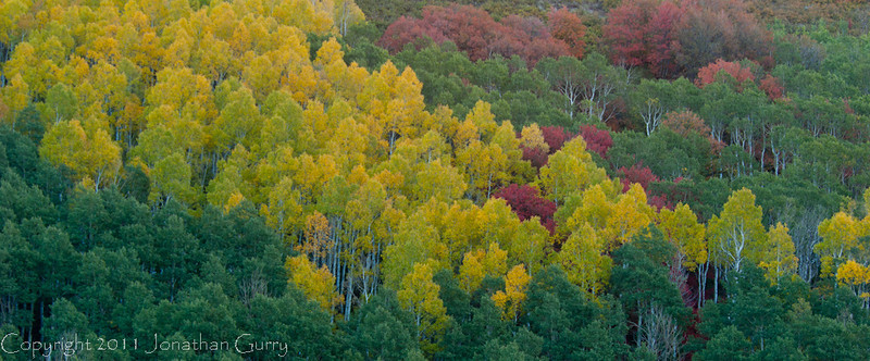 1057 - Red, Yellow, and Green fall.  Wasatch Mountains, Utah.