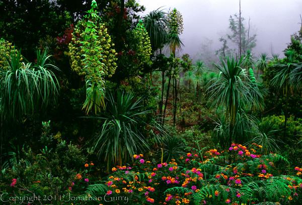 1044 - Waimea Canyon forest, Kauai.