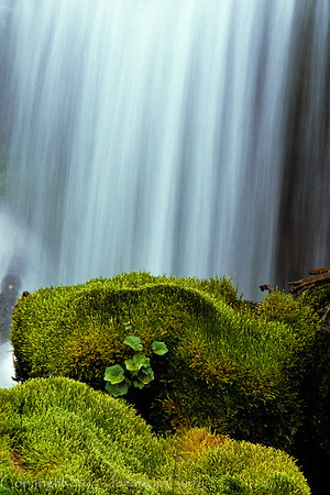1038 - Waterfall and moss.  Uinta Mountains, Utah.