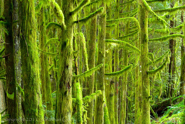 1114 - Mossy forest in the North Cascades National Park, Washington.