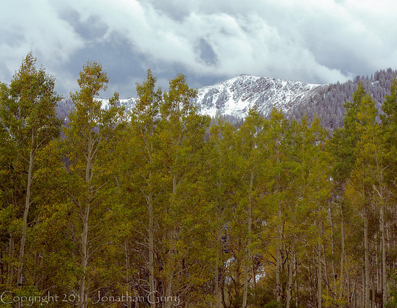 1041 - Aspens in fall with first snow on the peaks.  Wasatch Mountains, Utah.