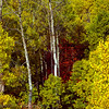 1027 - Aspens and Maples in fall.  Wastach Mountains, Utah.