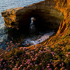 1136 - Sunset Cliffs. Encintas, California.