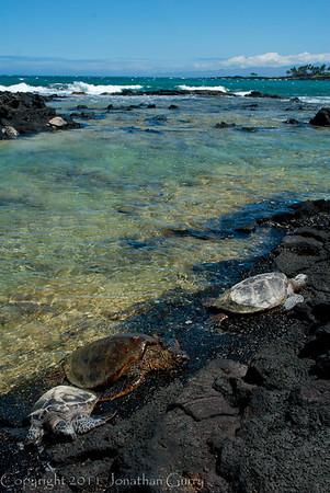 1129 - Sea Turtle.  Kona Coast, Hawaii.