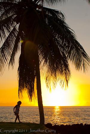 1131 - Palm Tree and Sunset on the Kona Coast, Hawaii.