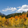 1167 - White Baldy Peak with fall Aspens  in the foreground.  Wastach Mountains, Utah.