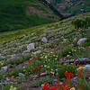 1140 - Wildflowers with Mt. Superior in background.  Albion Basin, Utah.