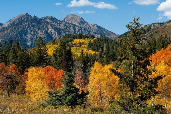 1166 - White Baldy Peak with fall Aspens  in the foreground.  Wastach Mountains, Utah.