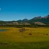 1281 - Jasper National Park, Alberta, Canada.