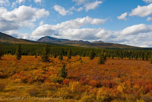 1286 - Fall Colors, Alaska.