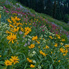 1143 - Wildflowers with Mt. Superior in background.  Albion Basin, Utah.
