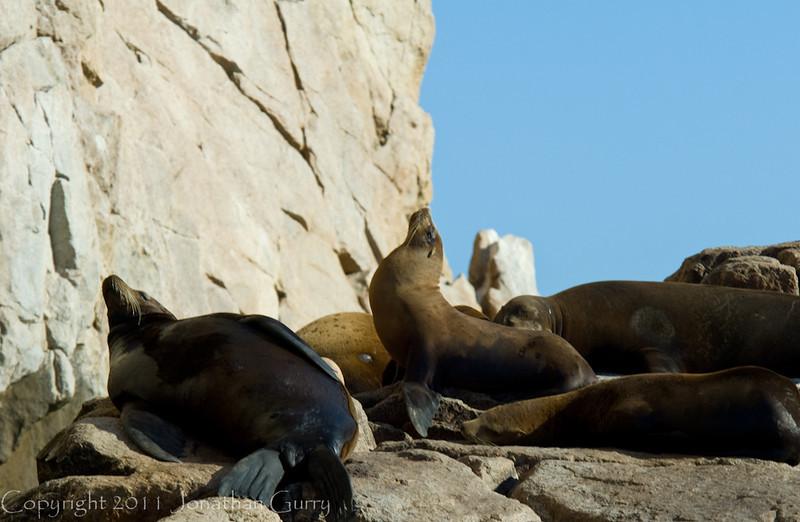 1252 - Sea Lion colony. Cabo San Lucas, Mexico.