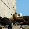 1252 - Sea Lion colony. Cabo San Lucas, Mexico.