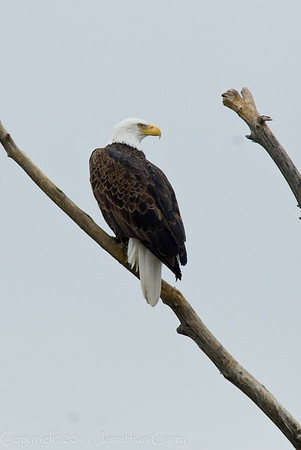 1122 - Bald Eagle, Utah.
