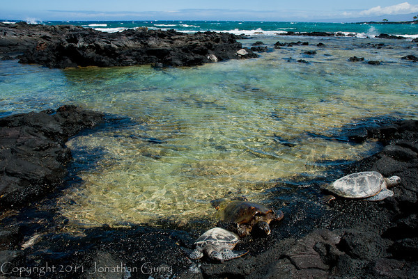 1128 - Sea Turtle.  Kona Coast, Hawaii.