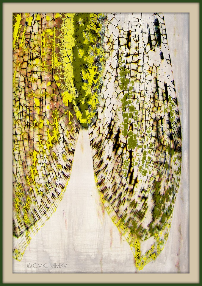 DobsonFlyWings<br /> Corydalus cornutus, Corydalidae, Megaloptera, Insecta