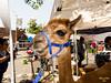 2014 Reedley Street Faire-3421