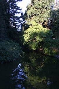 Another still glassy pond