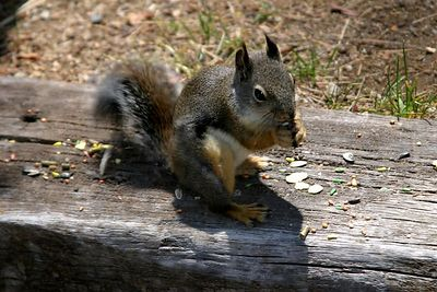 Same fat squirrel chowing down