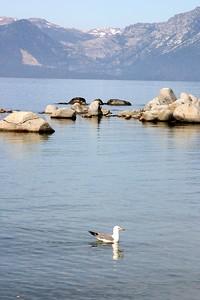 A very lost Sea gull.
