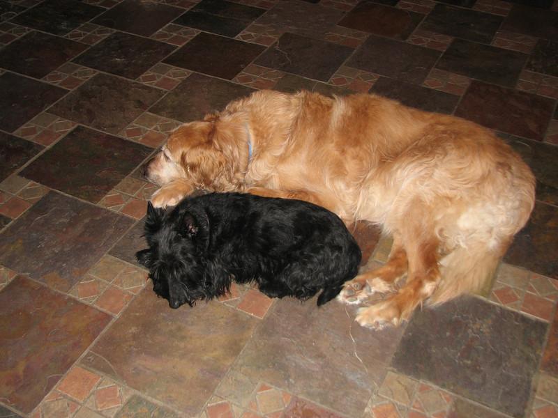 Belle loves Duke!!<br /> <br /> Green Acres Garden - Linda's Bonnie Scots - Princeton Texas