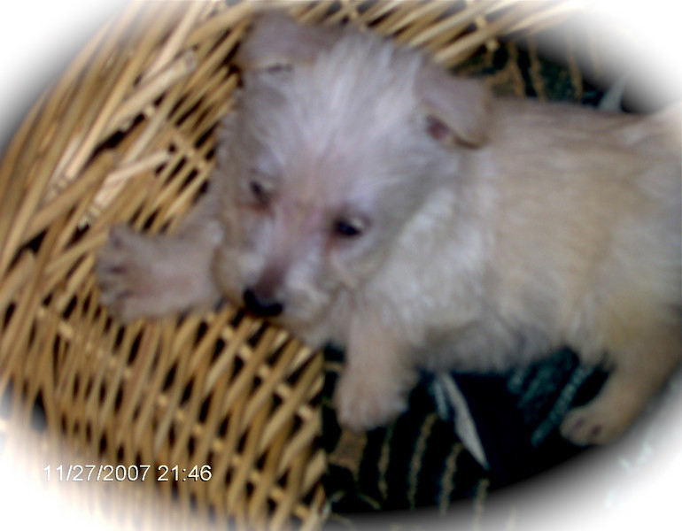 Whitney was so tiny when we got her!!! <br /> <br /> Green Acres Garden - Linda's Bonnie Scots - Princeton Texas
