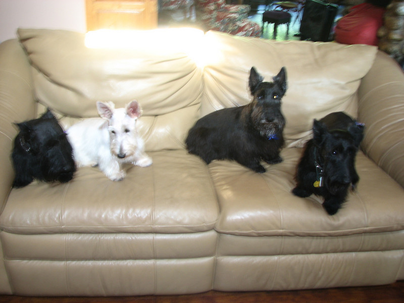 Belle, my foundation Dam - Whitney, Max (sorry not a Momma!) and Kelsey!