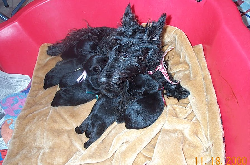 Aggie - such a dedicated Mom, retired a few years ago, we keep several of her pups in the kennel!