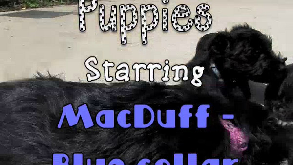MacDuff, Sadie & Tosh - 3 Magic Puppies!! This is the original version - unfortunately YOUTUBE removed the audio portion of it... Pretty silly, right?