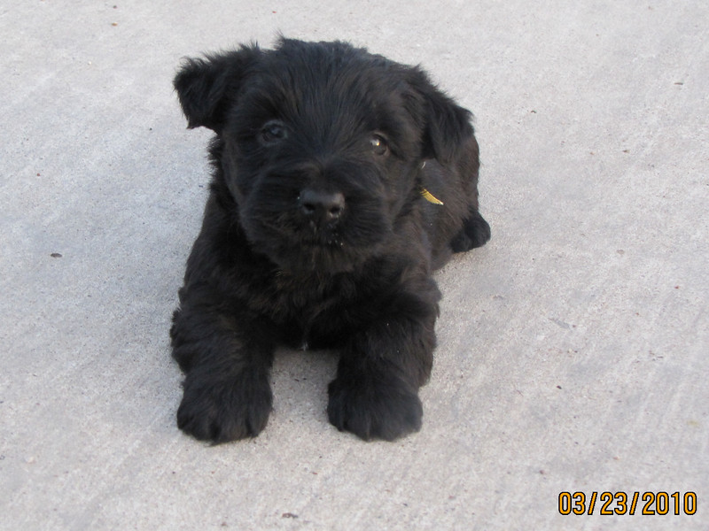Lizzie Jill - Absolutely a little doll, the runt of the litter, I always love the runt!!