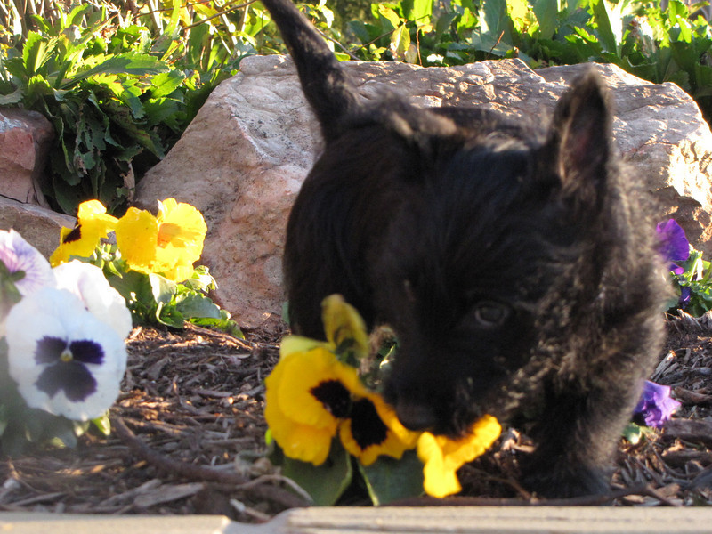 TRUSTY - Black gentle sweet loving lots of kisses!!