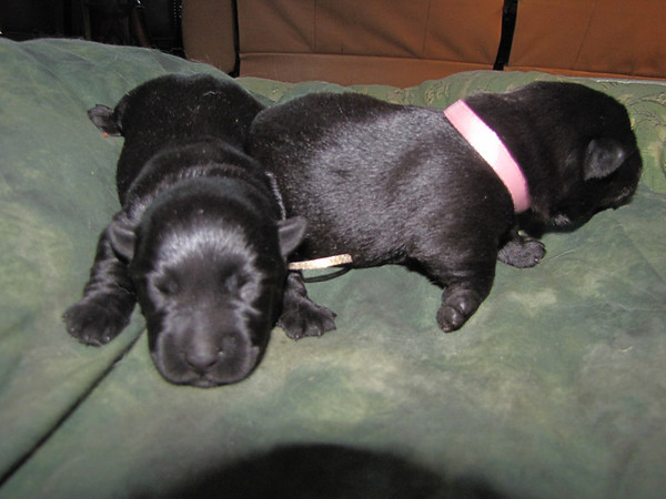 Kelsey and Angus proudly announce their new Arrivals on August 6, 2009!!