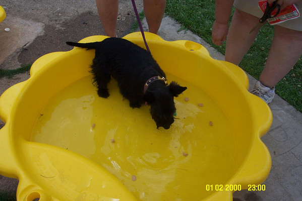 FALA DAY - Belle won the 1st place blue ribbon for all the Girl Scotties for eating wieners off the bottom of a wading pool!! Most of the Scotties refused to stick their nuzzle in the water!!! <br /> <br /> Fala Day in Irving - You should go if you don't already! It is tons of fun to take your Scottie and it supports Scottie Rescue in North Texas!!