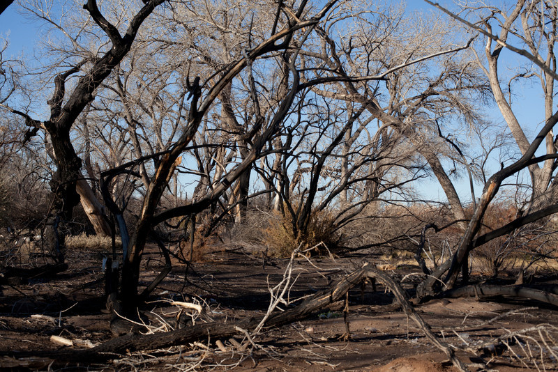 The Bosque, Burn