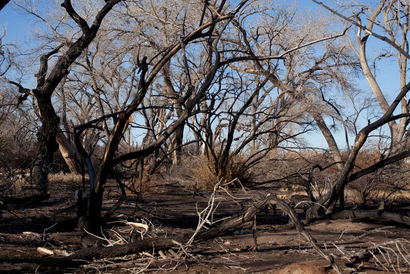 The Bosque, Burn