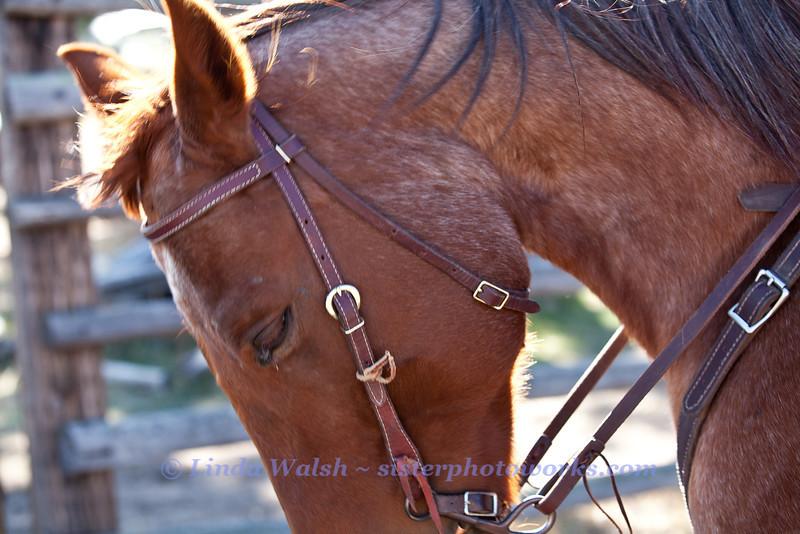 Fall Roundup, Trevartan 2011-3034