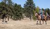 Fall Roundup, Trevartan 2011-2903