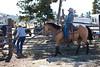 Fall Roundup, Trevartan 2011-3031