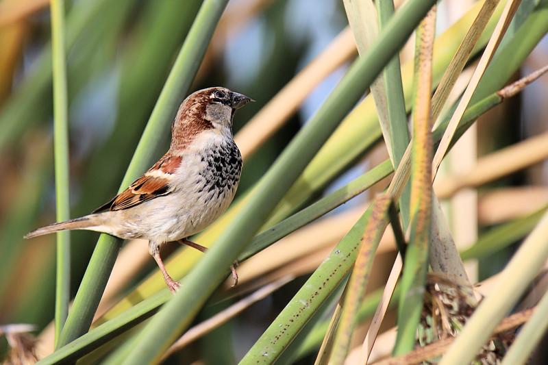 IMG_3076 Lindo Lake Brown Bird 12.31.2017.jpg