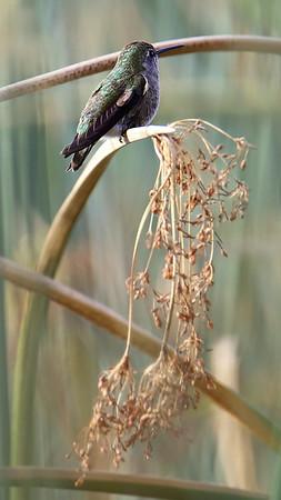 Lindo Lake Birds_Tamron 150-600MM Lens