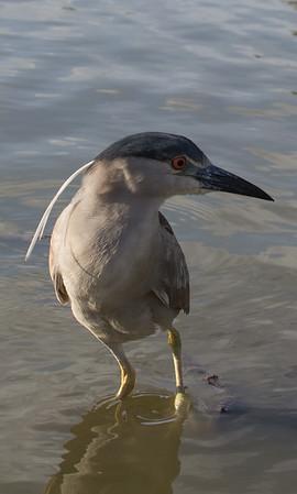 Lindo Lake Birds